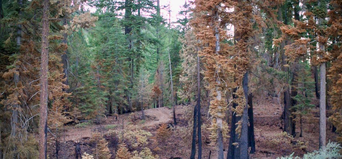 Mt. Hough Trail in the Burn Scar